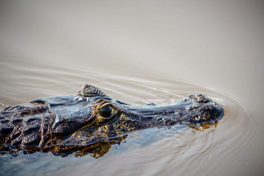 Viaggio fotografico in Pantanal