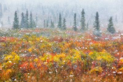 alaska-fotografico-punto-viaggio-4