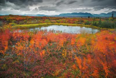 alaska-fotografico-punto-viaggio-5