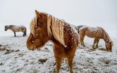 Islanda-viaggio-fotografico-fotocorsi (24)