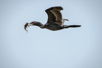 pantanal-viaggio-fotografico (29)