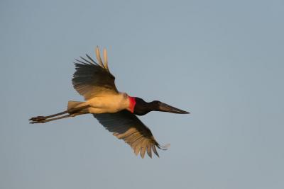 pantanal-viaggio-fotografico (30)